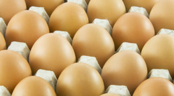 12月末までの短期 卵のパック詰め 女性スタッフ活躍中
