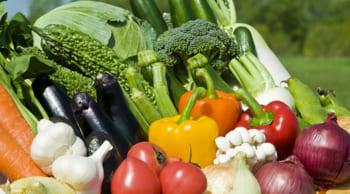 中高年・シニア活躍中|空調完備で年中快適|野菜商品の製造&検品