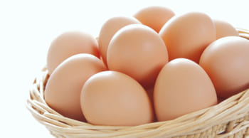 12月末までの短期|養鶏場での飼育補助|未経験の方歓迎