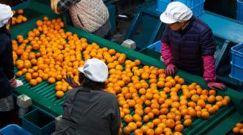 私服OK│未経験歓迎│男女活躍中│選果場にて果物の選果業務