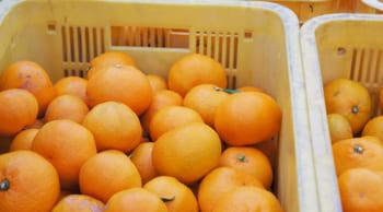 12月1日スタート|期間限定|青果物の積み込み作業