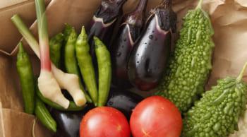 期間限定|毎年人気のお仕事│簡単な野菜の選別・箱詰め業務