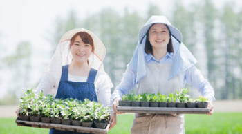 <短期>先行受付開始|20名大募集|野菜苗の接ぎ木・種付け・運搬業務