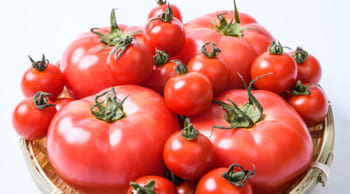 オープニングスタッフ トマトの箱詰め・仕分け作業 2022年1月末まで期間限定