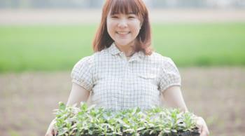 野菜苗の接ぎ木|15名大募集|短期7/1~9月初旬|土日祝休み