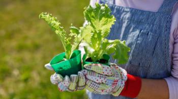 野菜苗の接ぎ木等|期間限定|9時~17時|WワークOK